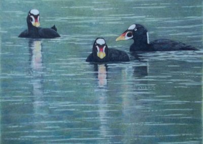 """Entry #19, """"Bachelor Brothers – Wintering Surf Scoters"""" by Deborah Strong."""