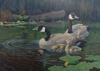 """Entry # 30 – """"Spring Morn – Canada Geese"""" by artist Coneybeare"""