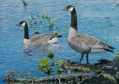 """Entry #34 – """"Point Pelee National Park – Canada Geese"""" by artist Murray"""